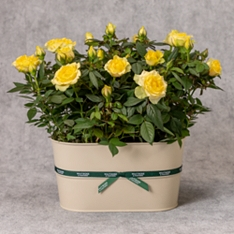 Yellow Rose Planter