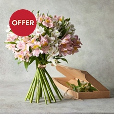 Mixed Alstroemeria - flowers by post