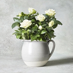 White Rose Jug Gift Set