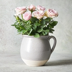 Autumn Rose Jug