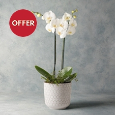 Orchid & Muehlenbeckia Planter