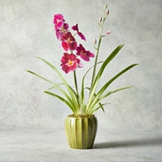 Miltonia Orchid in Ceramic Planter