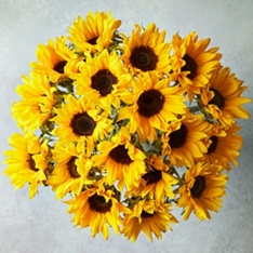 Medium British Sunflowers - ready to arrange