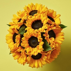 British Sunflowers - ready to arrange