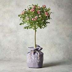 Pink Rose Hessian Planter