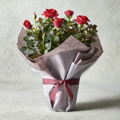 Gift Wrapped Rose