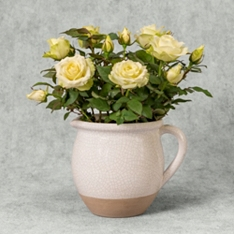 White Rose Planter
