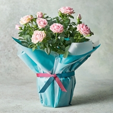 Mother's Day Pink Rose Planter