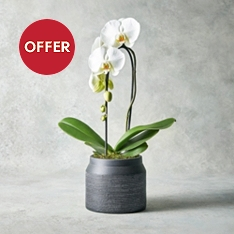Cascade White Orchid Planter