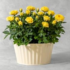 Waitrose Florist & Plants For Next Day Delivery | Plant Gifts | Waitrose Florist