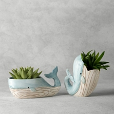 Succulents in Whale Planters
