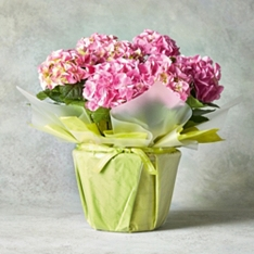 Hydrangea Wrapped Gift