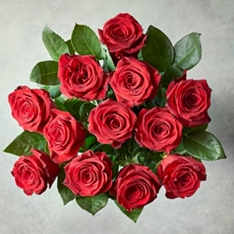 Valentine's Day Freedom Red Roses