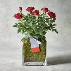 Valentine's Day Red Rose Planter