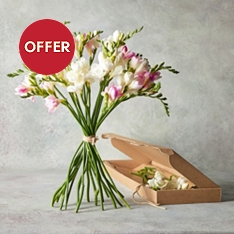 Mixed Freesias - letterbox flowers