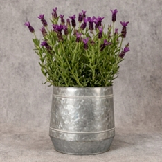 Flowering Lavender Planter